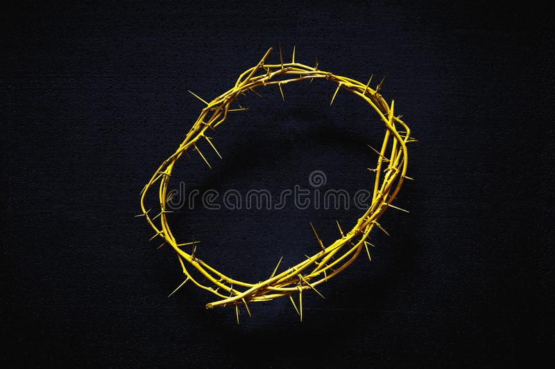Yellow Crown Of Thorns On A Black Background, Top View royalty free stock photography