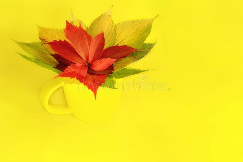 A yellow cup stands on a yellow table with a bouquet of bright foliage of trees. Autumn. A yellow cup stands on a yellow table with a bouquet of bright foliage stock image