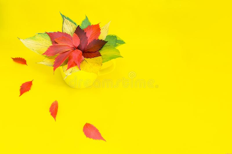 A yellow cup stands on a yellow table with a bouquet of bright foliage of trees. Autumn. A yellow cup stands on a yellow table with a bouquet of bright foliage stock photos