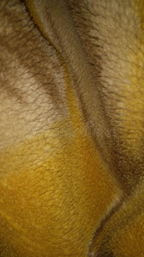 Yellow cutton scarf stock photography
