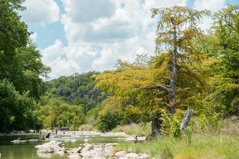 The yellow cypress tree on the river bank in the beginning of autumn with people in the river. Pedernales Falls National state par stock images