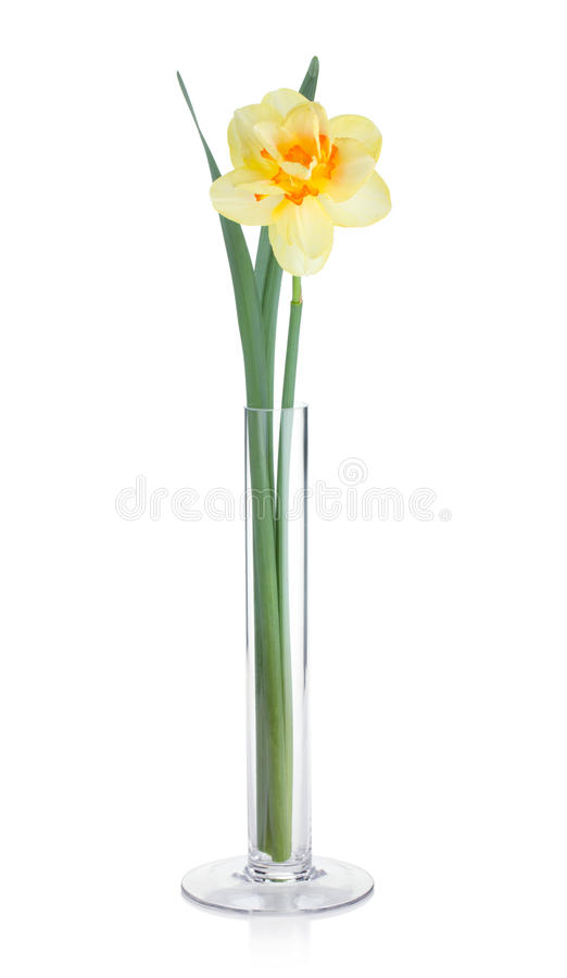 Yellow Daffodil In Vase Stock Image Image Of Love Bunch 24776113