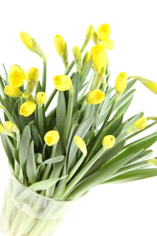 Download Yellow Daffodils Stock Photography - Image: 23205112