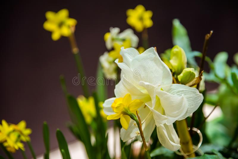 Various spring flowers in one flowerbed stock photography