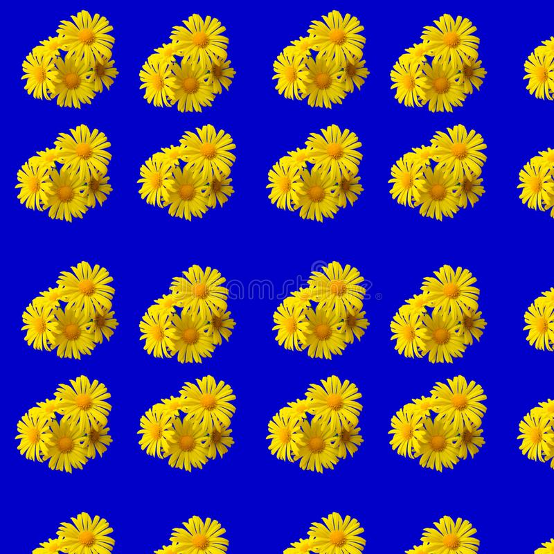 Yellow daisies on a blue background. Seamless camomile background. Daisies on a blue background. Seamless camomile background royalty free stock photo