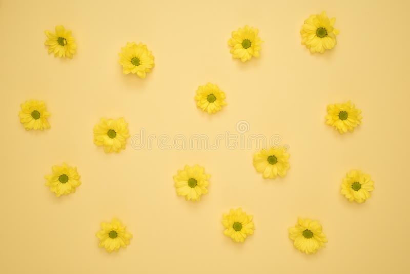 Yellow Daisies Laid on Yellow Surface royalty free stock images