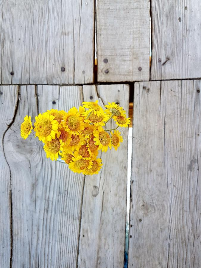 Yellow Daisies on a Wooden Background stock image
