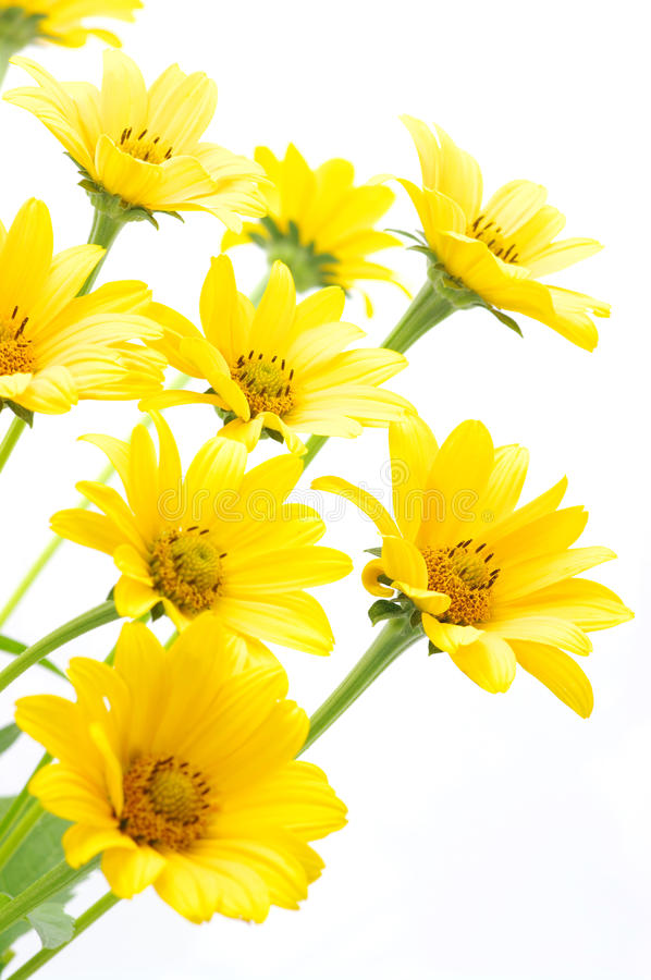Free Yellow Daisy Royalty Free Stock Images - 16481319