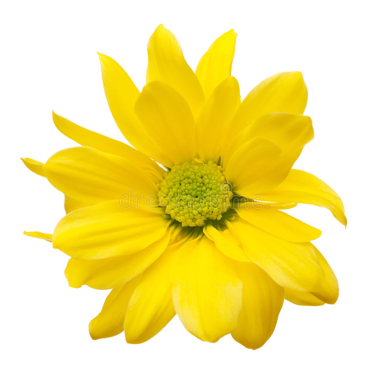 Free Yellow Daisy Stock Images - 2359834