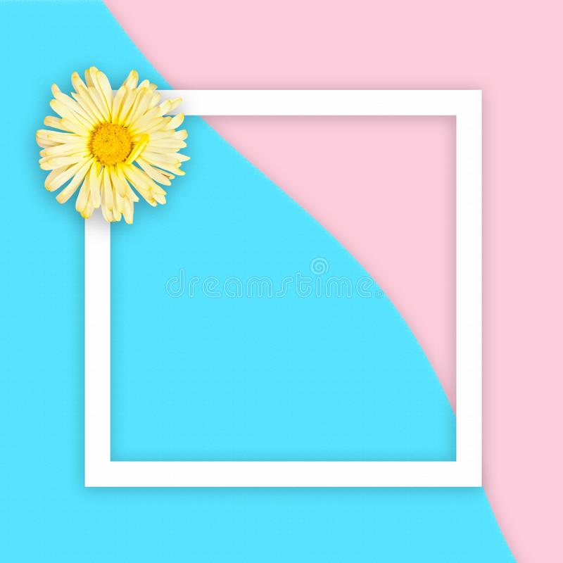 Yellow daisy on abstract sea and pink sand background with white flat frame square. Flat lay. Top view royalty free stock image