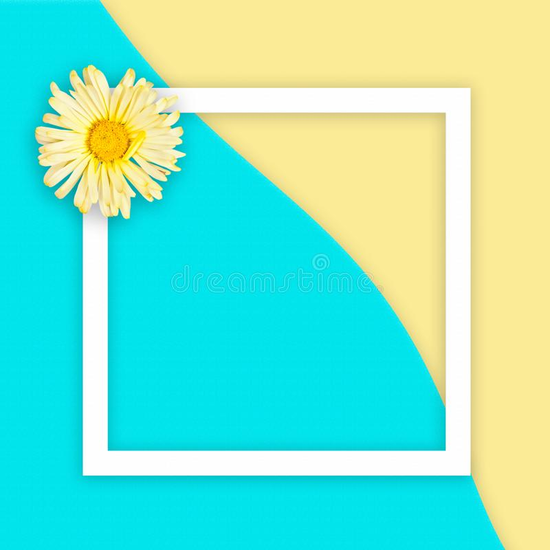 Yellow daisy on abstract sea and sand background with white flat frame square. Flat lay. Place for text stock photography
