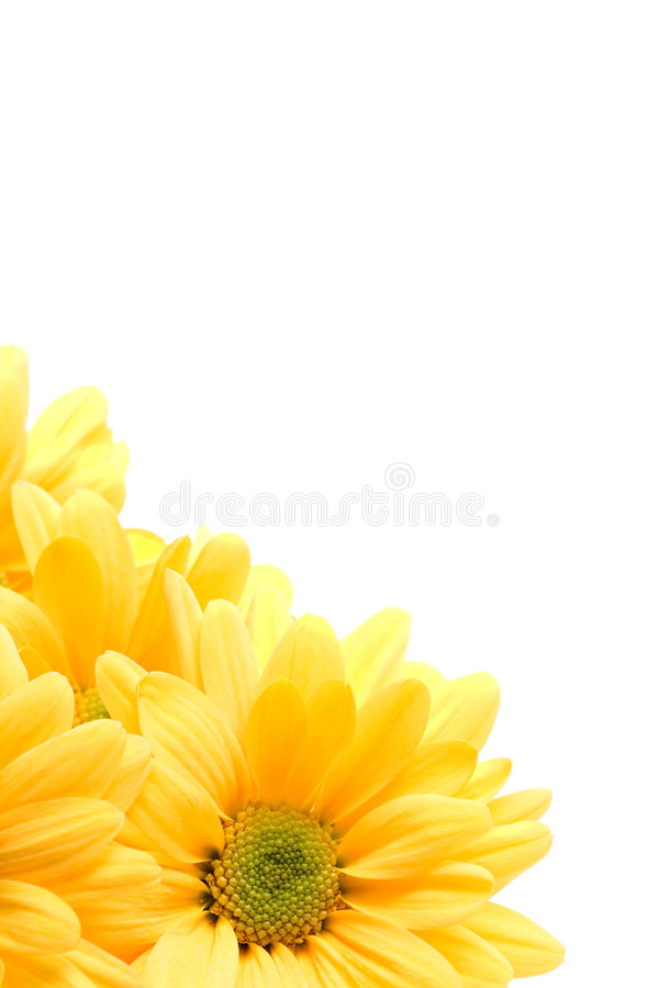 Free Yellow Daisy Corner Royalty Free Stock Images - 2242399