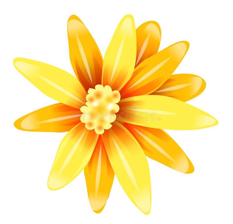 Yellow daisy flower stock illustration