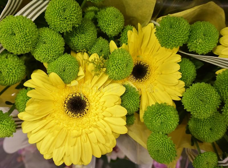 Yellow Daisy Flower and Green Button Chrysanthemums royalty free stock photography