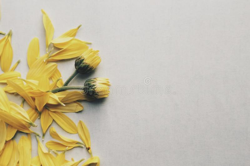 Yellow Daisy Flowers on Surface royalty free stock image