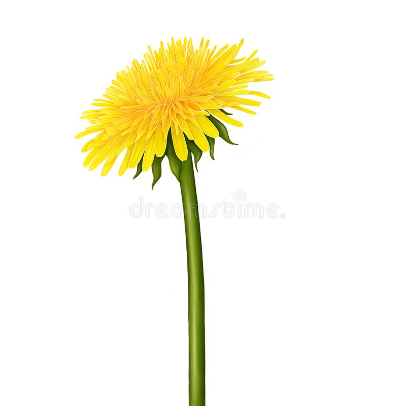 Free Yellow Dandelion Flower. Royalty Free Stock Image - 169941336