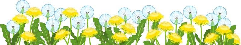 Yellow dandelions flowers and white blowballs field. Flower border. Yellow dandelions flowers and white blowballs field isolated on white background. Flower stock illustration