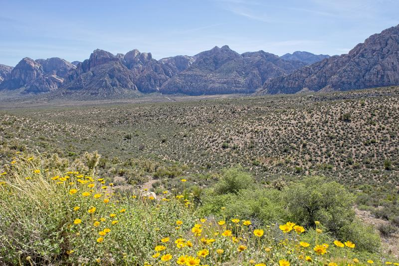 Yellow Desert Wildflowers in the foreground with majestic mountains in the background. Wildflowers along the ground in Red Rock Canyon Nature Conservancy with stock photography