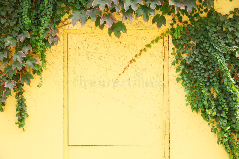 Yellow door and wall royalty free stock image