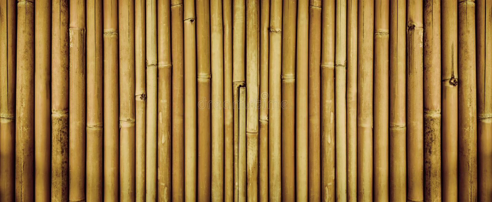 Yellow dried bamboo fence texture, bamboo texture background royalty free stock images