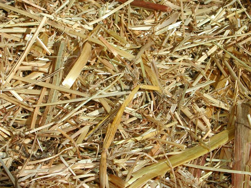 Dried straw close up royalty free stock images