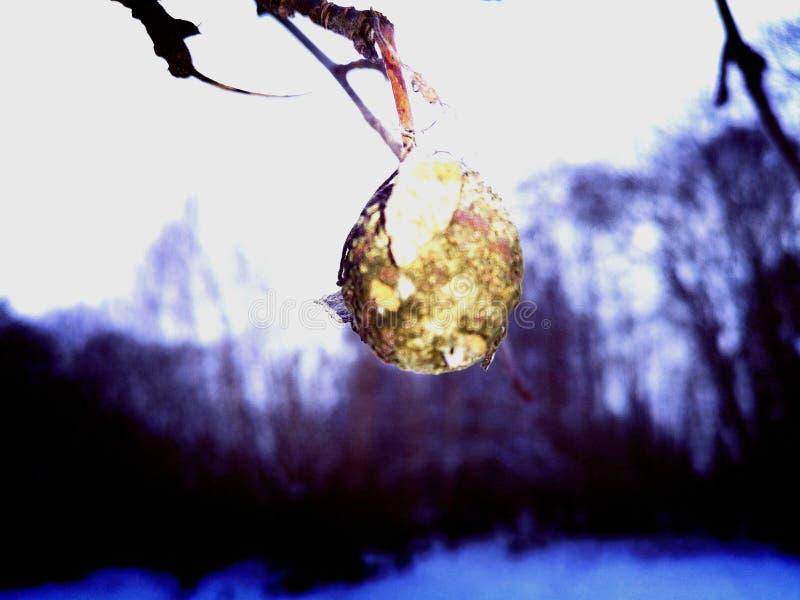 Yellow drop in winter stock photo