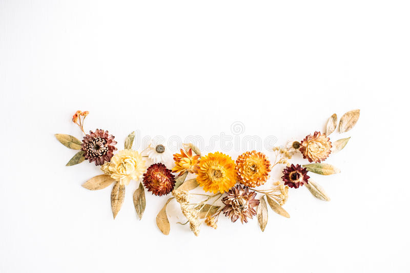 Yellow dry flowers, branches, leaves and petals on white background stock images