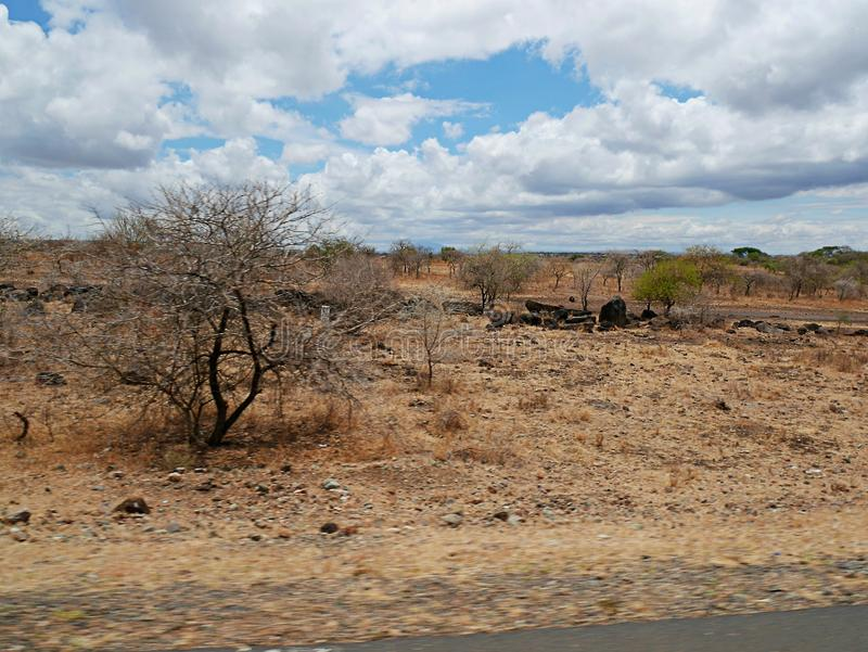 Yellow earth in Africa. Cloudy sky in Tanzania, Yellow earth in Africa, Africa, to meet adventures, safaris, Tarangiri, drought, Ngorongoro,gray earth, the royalty free stock image