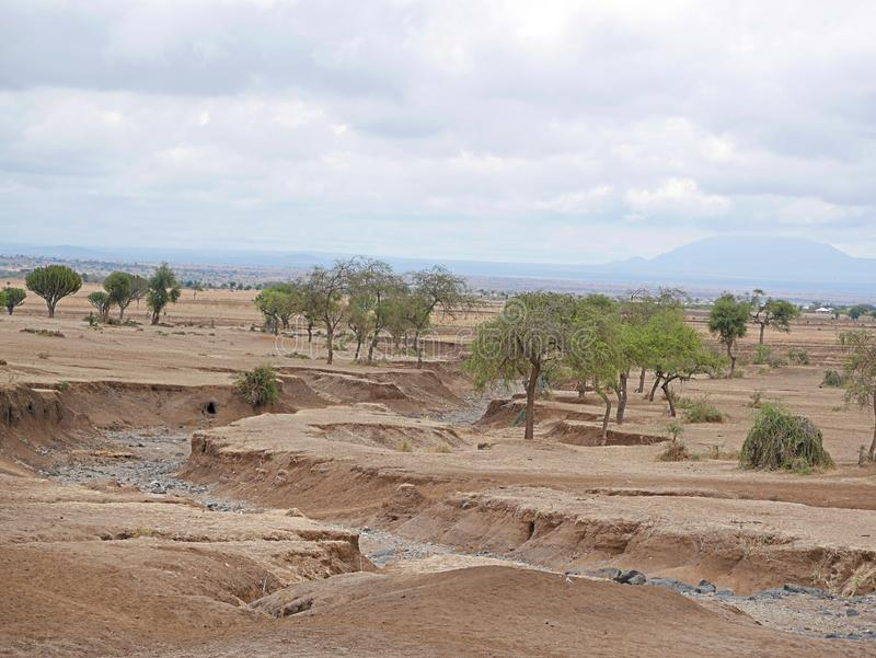 Yellow earth in Africa. Cloudy sky in Tanzania, Yellow earth in Africa, Africa, to meet adventures, safaris, Tarangiri, drought, Ngorongoro,gray earth, the stock image