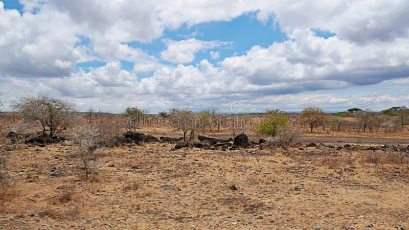 Yellow earth in Africa. Cloudy sky in Tanzania, Yellow earth in Africa, Africa, to meet adventures, safaris, Tarangiri, drought, Ngorongoro,gray earth, the stock photography