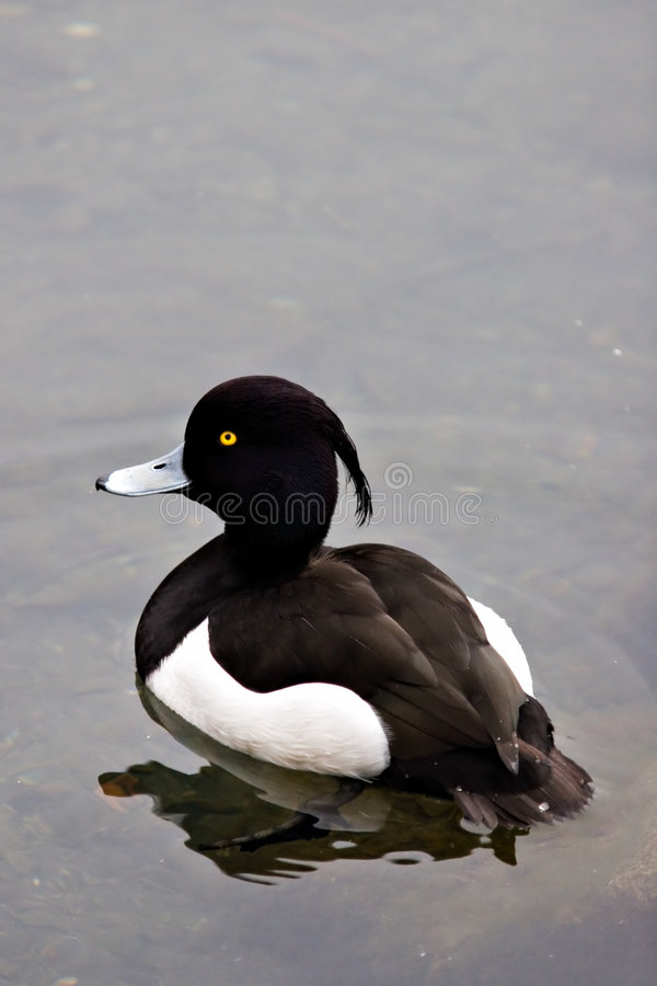Yellow eyed bird stock images