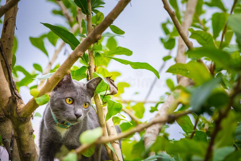 Yellow eyes cat on a tree. stock photography