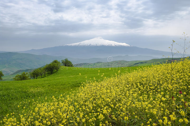 yellow för berg för blommagräsgreen vit royaltyfri foto