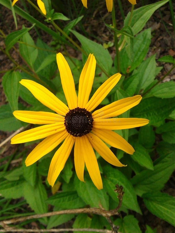 yellow för 2 blomma arkivfoto