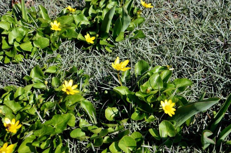 yellow för fjäder för dof-blomma grund arkivfoton