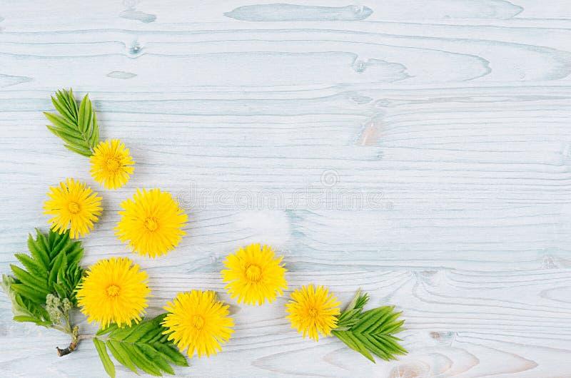 yellow för fjäder för äng för bakgrundsmaskrosor full Gula maskrosblommor och gröna sidor på ljus - blått träbräde med kopierings royaltyfri fotografi
