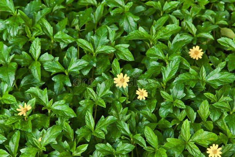 yellow för natur för leaf för bakgrundsblommagreen royaltyfria bilder