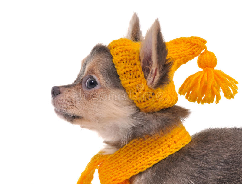 yellow för scarf för hattståendevalp arkivbilder