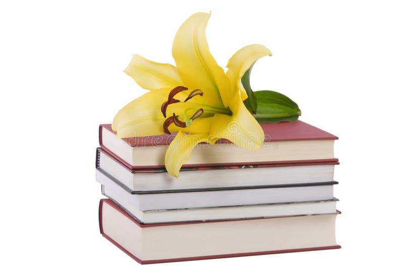 yellow för stapel för bokblommalilja arkivfoto