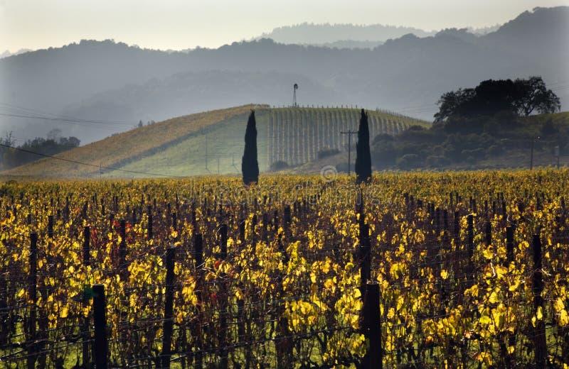 yellow för utsikt för Kalifornien napavingårdar royaltyfria bilder