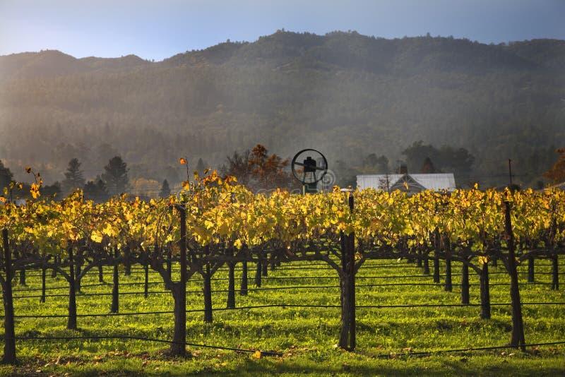 yellow för wine för vingårdar för fallnapavines royaltyfria foton