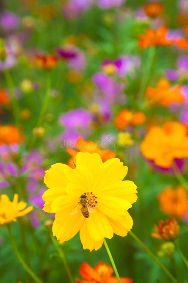 yellow för working för biblomma ny arkivbild