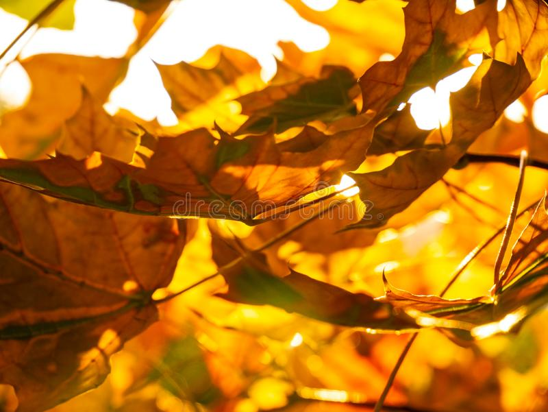 Yellow fall leaf fallen on the dirt track. royalty free stock images