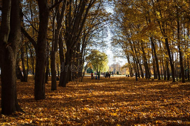 Golden autumn, leaves on earth in the bright light of the sun stock images