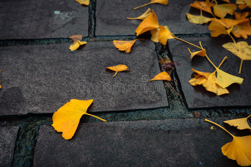 Yellow fallen leaves on the pavement. Yellow fallen leaves on the wet pavement royalty free stock photography