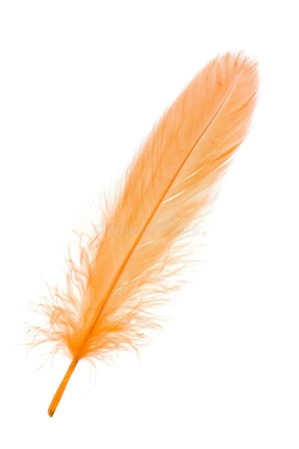 Free Yellow Feather Stock Photo - 10098840