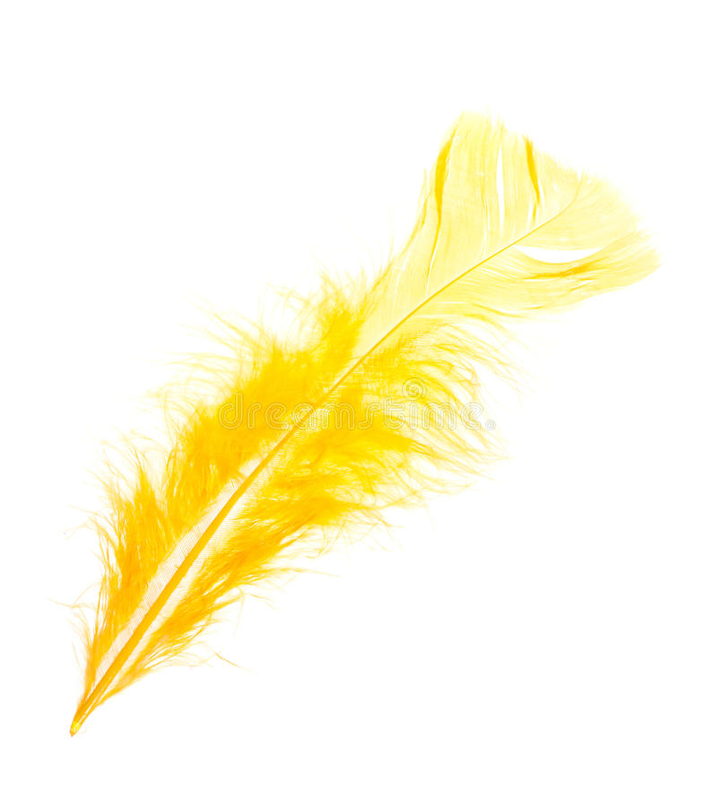 Free Yellow Feather Royalty Free Stock Images - 17739329