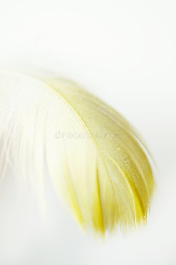 Download Yellow Feather Macro Stock Image - Image: 18955641