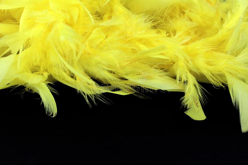 Yellow feathers on black background stock photo