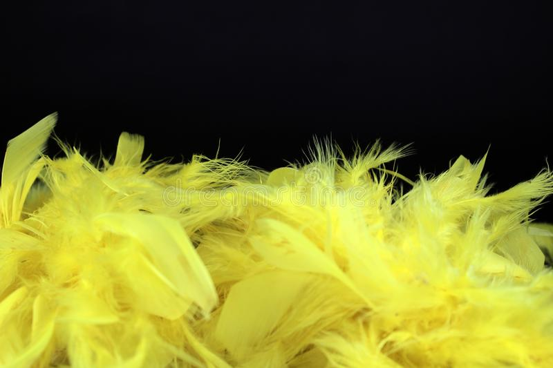 Yellow feathers on black background stock photography